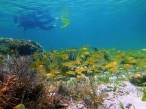 Schnorcheln mit tropischen Fischen Lizenzfreie Stockbilder