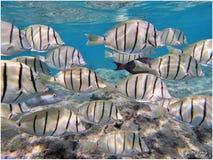 Schnorcheln mit tropischen Fischen stockfotos