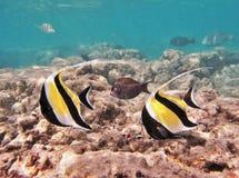 Schnorcheln mit tropischen Fischen lizenzfreie stockfotos