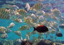 Schnorcheln mit tropischen Fischen lizenzfreies stockbild