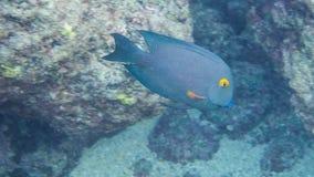 Schnorcheln mit tropischen Fischen stockbild
