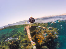 Schnorcheln Sie Schwimmen im seichten Wasser, Rotes Meer, Ägypten Safaga Stockbilder