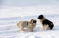 Schoßhund stockfoto