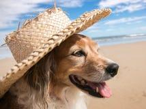 Schoßhund, der einen Strohsonnenhut am Strand trägt Stockbild