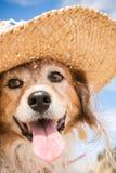Schoßhund, der einen Strohsonnenhut am Strand trägt Lizenzfreies Stockfoto