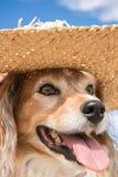 Schoßhund, der einen Strohsonnenhut am Strand trägt Lizenzfreie Stockfotos