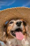 Schoßhund, der einen Strohsonnenhut am Strand trägt Lizenzfreie Stockbilder
