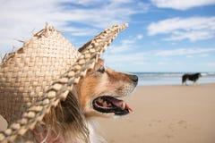 Schoßhund, der einen Strohsonnenhut am Strand trägt Stockfotografie