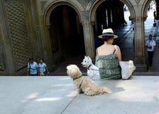 Schoßhunde, die geduldig mit ihrem Menschen warten Lizenzfreies Stockbild