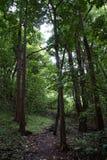 Schodek jak kroki na oddolnej ścieżce w górę 'Ualaka'a śladu w fo Obrazy Royalty Free