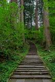 2446 schodków prowadzi w górę góry Haguro Zdjęcie Royalty Free