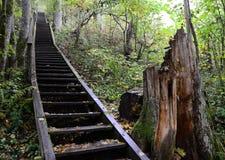 Schodki w lesie Obraz Stock