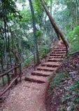 Schodki w natury lasowej ścieżce zdjęcie royalty free