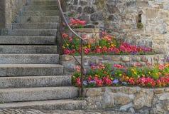 Schodki z multicolor kwiatami Obraz Stock