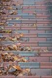 Schodki zakrywający z suchymi liśćmi zdjęcia stock