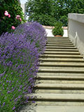 schody. Obraz Stock