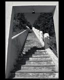 schody Obraz Royalty Free