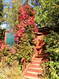 Schody i domowy drzwi w lesie Fotografia Royalty Free