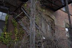 Schody Przerastający z roślinami Zdjęcie Stock