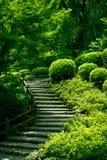 Schody Przez lasu Zdjęcie Royalty Free