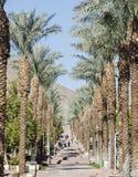 Schody wśród palmy Fotografia Royalty Free