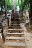 Schody w bambusowym lesie Obrazy Royalty Free