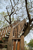 Schody wzrosta drzewo Obraz Royalty Free