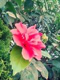 Schoen-bloem Royalty-vrije Stock Afbeelding