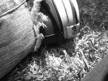 Schoen op het Gras stock afbeelding