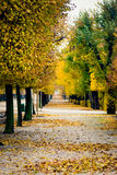 Schoenbrunn empty park alley with autumn trees transforming into Royalty Free Stock Photos