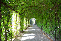 Schoenbrunn gardens Royalty Free Stock Photos