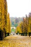Schoenbrunn park z pięknie obciętymi klonowymi drzewami obraca br Zdjęcia Royalty Free