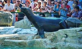 schoenbrunn zoo Zdjęcia Royalty Free