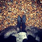 Schoenen Stock Afbeelding