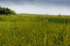 Schoenobaenus настоящей камышевки Среда обитания гнезда певчей птицы осоки земли Стоковое Изображение