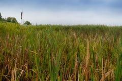 Schoenobaenus настоящей камышевки Среда обитания гнезда певчей птицы осоки земли Стоковые Фото