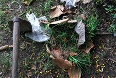 Schoffel in de tuin wordt geplaatst die stock fotografie