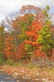 Schoharie Creek and fall colors Stock Image
