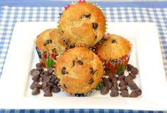 Schokoladen-Chip-Muffins Stockbilder