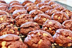 Schokoladen-Erdnussbutter-Chipplätzchen Lizenzfreie Stockfotografie