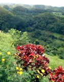 Schokoladen-Hügel, Bohol philippinen Lizenzfreies Stockfoto