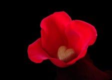 Schokoladen-Inneres in den Rosen-Blumenblättern Lizenzfreies Stockfoto
