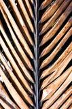 Schokoladen-Palme stockfotos