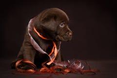 Schokoladenlabrador-Welpe, der auf einem braunen Hintergrund sitzt lizenzfreie stockfotografie