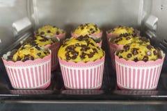 Schokoladensplittermuffins auf Tray Bake, selektiver Fokus stockbild