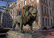 The Scholar's Lion sculpture at Columbia University. The Scholar's Lion, sculpted by Greg Wyatt at Morningside Campus of Columbia University, near Royalty Free Stock Image