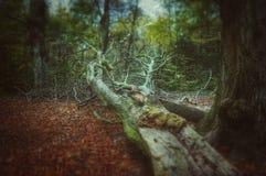 Scholes-Holz Stockbild