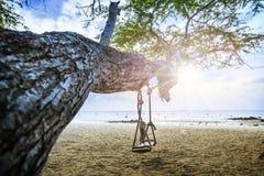 Schommeling bij boom op het strand Stock Afbeelding