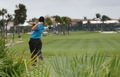 Schommeling in doral golf, Miami Royalty-vrije Stock Afbeelding