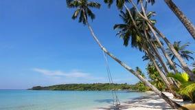 Schommeling en palm op het zand tropische strand stock video